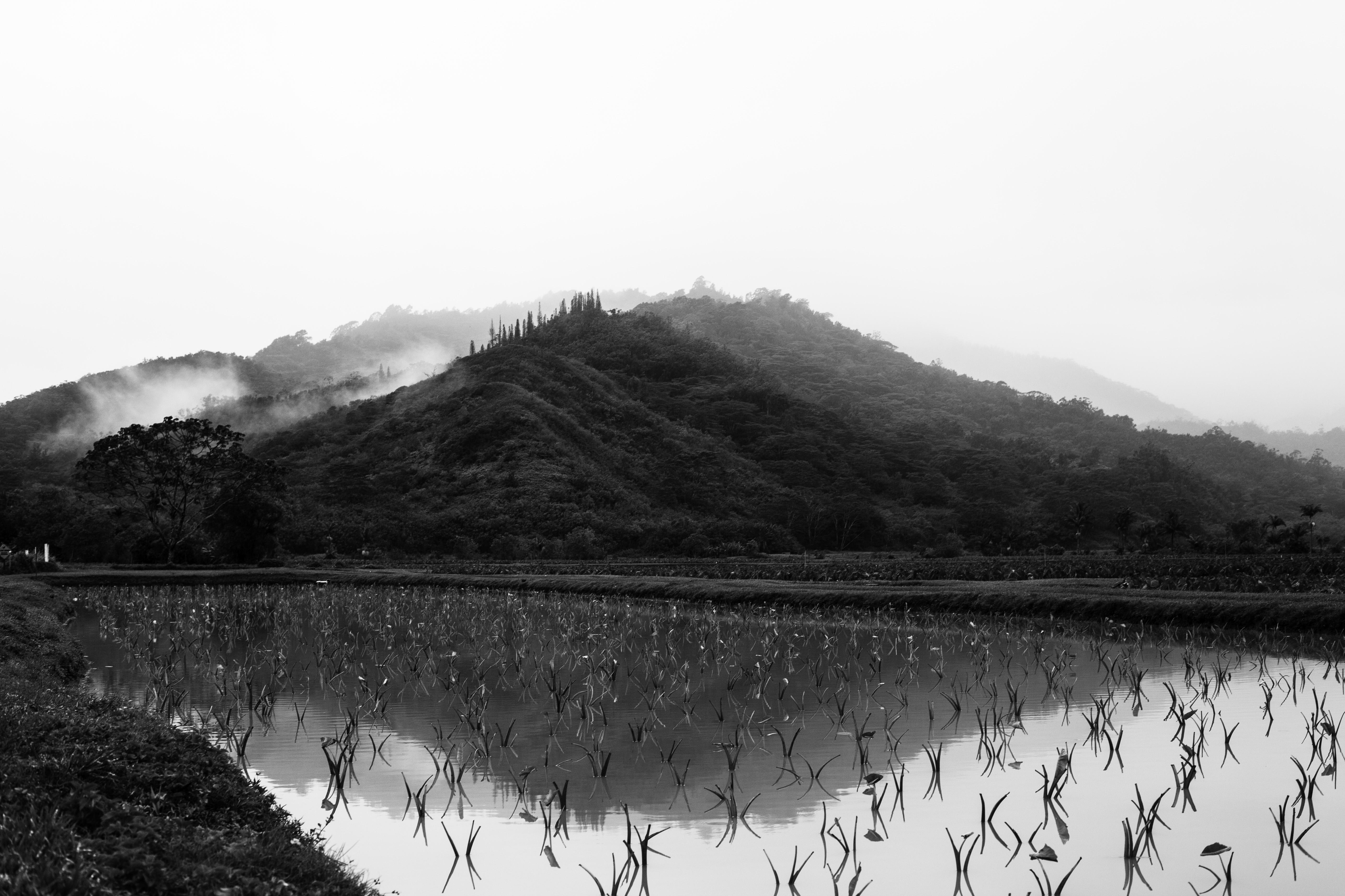 IMG_0984Kauai-Foggy-Morning-Rain-BW.jpg